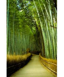 bamboogarden.132008